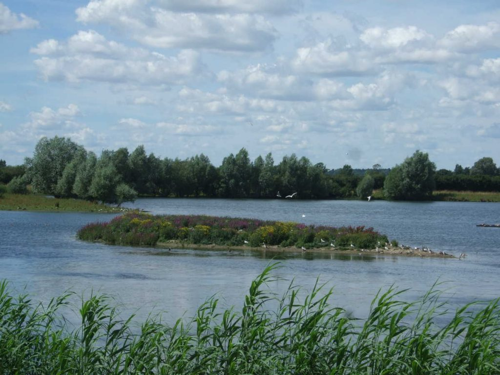 Fen Drayton Lakes: birds and island
