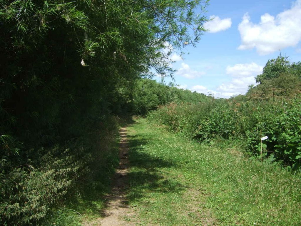 Fen Drayton Lakes: path