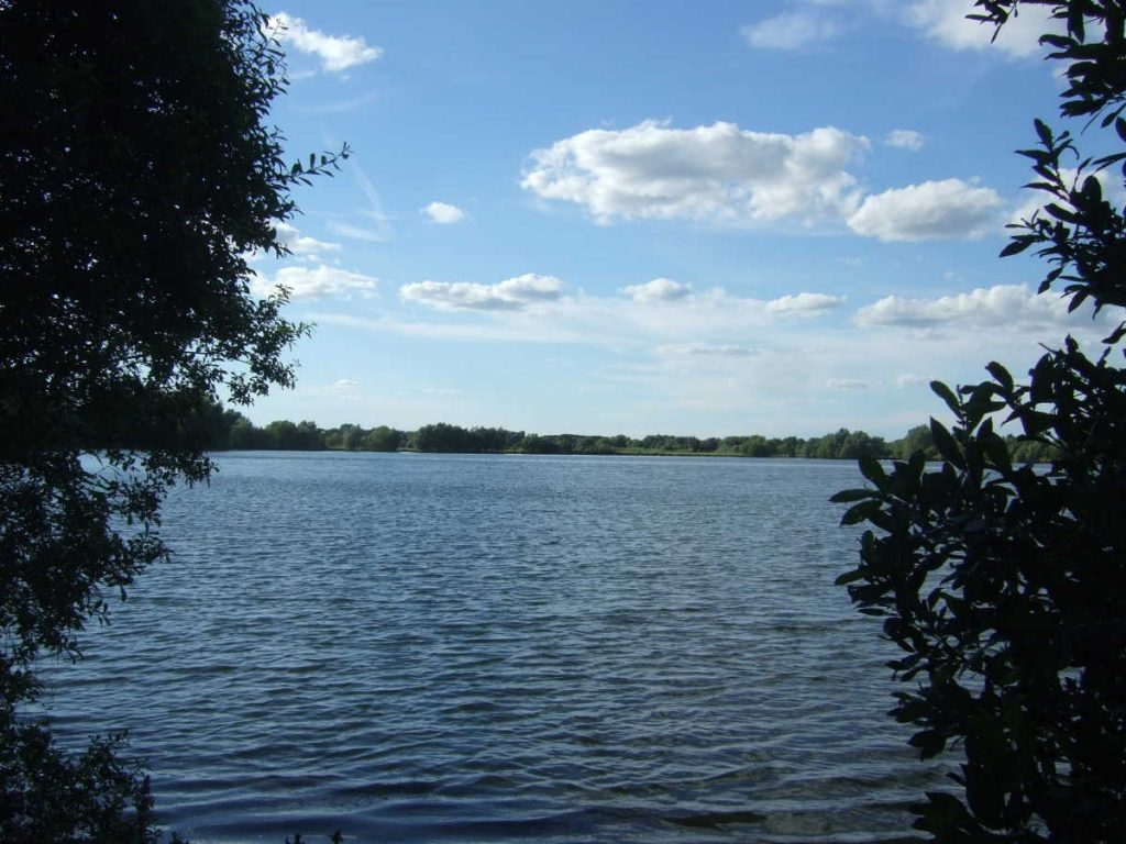 Fen Drayton Lakes: lake and bushes